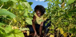 TicAgriculture